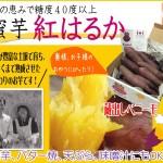 熊本県産「なかせ農園」糖度40度以上 紅はるか